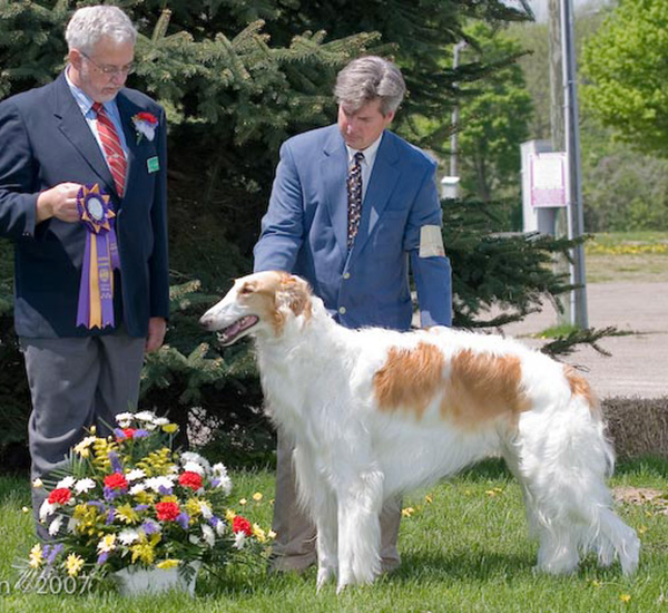 Borzoi Canada 2007 National Best of Breed