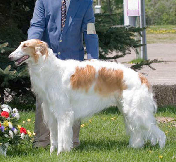 Borzoi Club of Ontario 2006 Best in Sweeps
