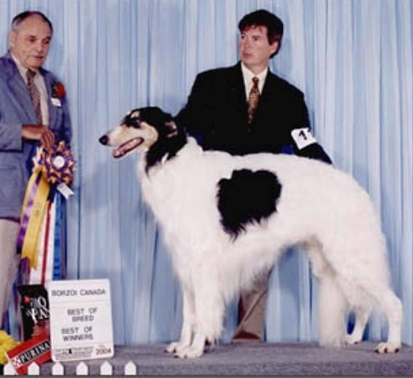 Borzoi Canada Regional 2004 Best of Breed and Best of Winners