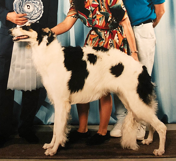 Borzoi Club of Ontario 1995 Best Puppy