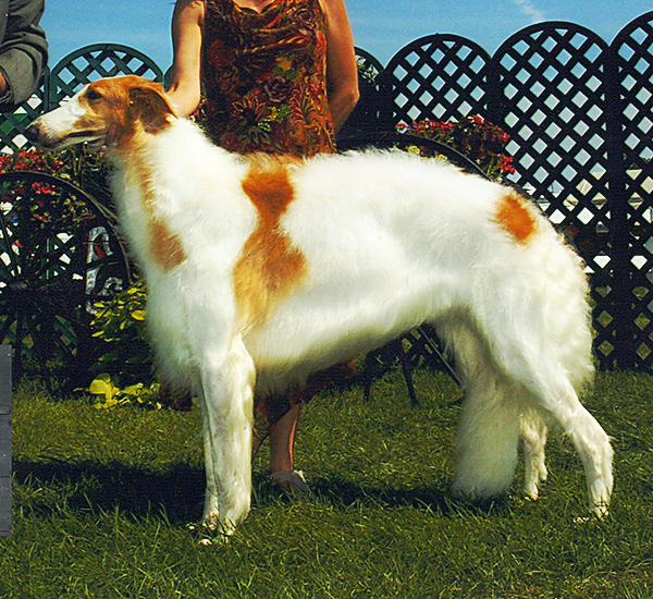 Borzoi Canada Ontario Regional 2005 Best of Opposite Sex