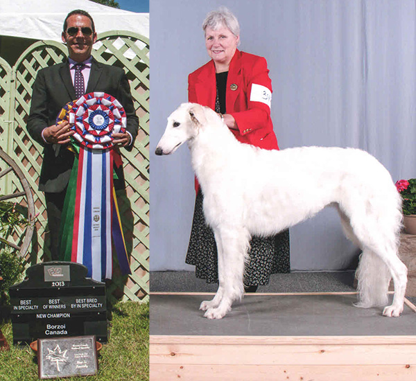 Borzoi Canada 2013 National Best in Specialty