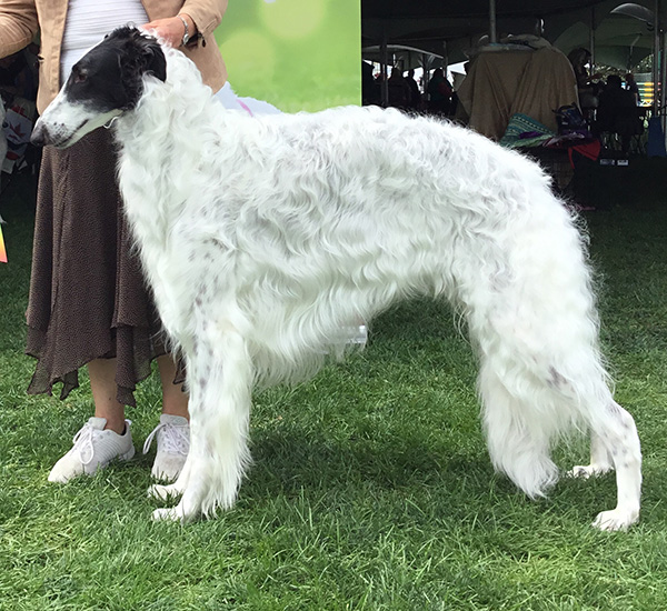GCh.  Konza-Plum Creek Carrera