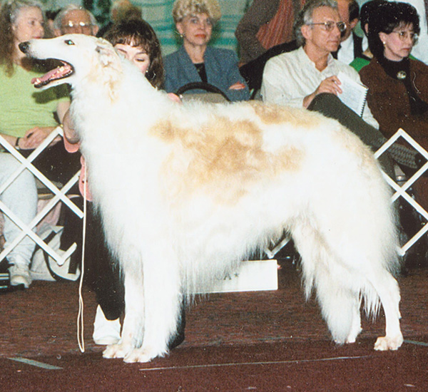 Borzoi Club of Ontario 1995 Winners Dog