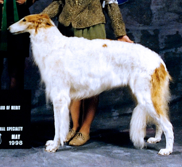 Borzoi Club of Ontario 1995 Reserve Winners Bitch