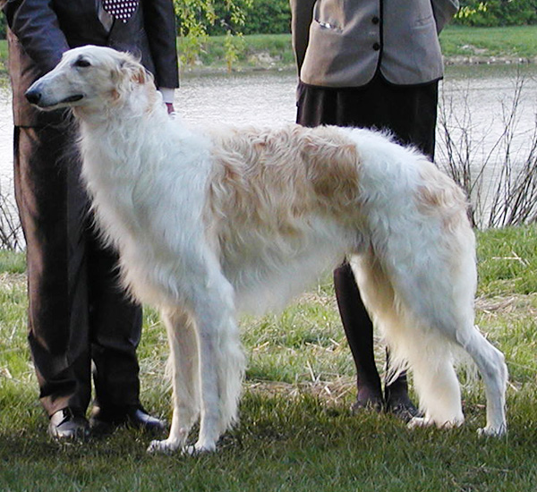 Borzoi Canada 2003 National Winners Dog and Best of Winners