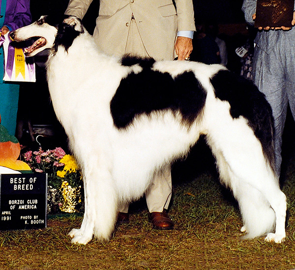 Borzoi Club of Ontario 1991 Best in Specialty