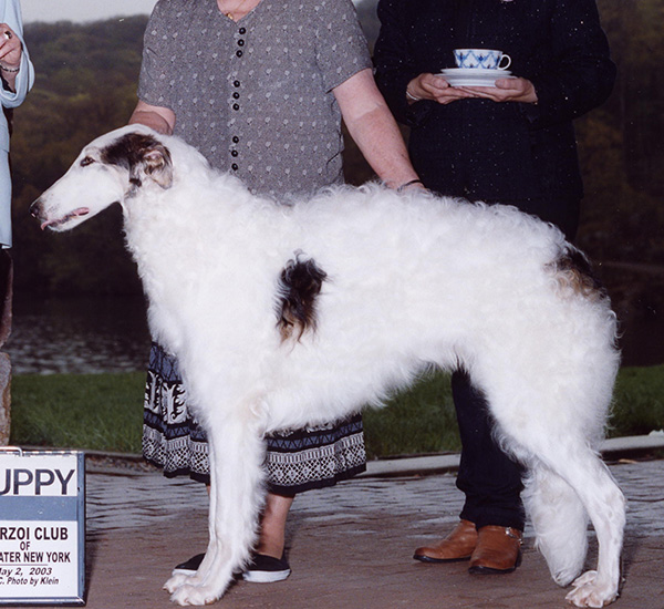 Borzoi Canada 2003 National Best in Puppy Sweepstakes