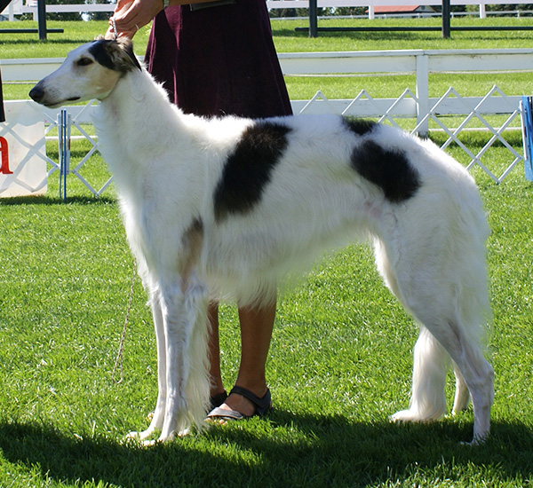 GCh. Taugo's Winterz Warrioress